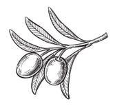 Black olive symbol Royalty Free Stock Images