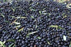 Black olives Stock Photography