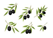 Black olives. Six fresh black olive branches Stock Image