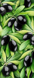Black olives. Over branches of green leaves, vertical natural background Stock Photography