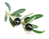 Black Olives Stock Photo