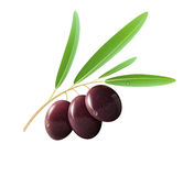 Black olives. Vector illustration of detailed black olives with leaves on white background Stock Photography