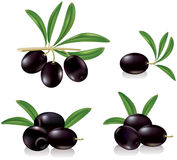 Black olives. Contains transparent objects. EPS10 Royalty Free Stock Images