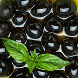 Black olives and basil Royalty Free Stock Images