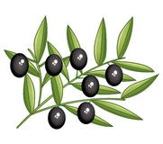 Black olives branch Stock Photography