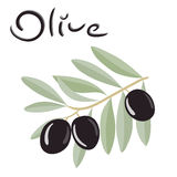 Black olives on a branch with leaves Stock Image