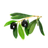 Black olives and green leaves Royalty Free Stock Photos