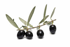 Black olives with leaves. Some olive branches with black olives and leaves stock photo