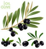 Black olives with leaves. Stock Photos