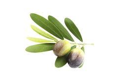 Black Olives Royalty Free Stock Photos