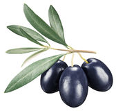 Black olives with leaves on a white background. Stock Images