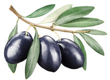 Black olives with leaves on a white background. Royalty Free Stock Image