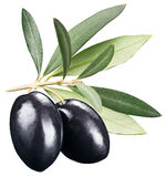 Black olives with leaves on a white background. Royalty Free Stock Photography