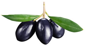 Black olives with leaves on a white background. Stock Image