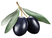 Black olives with leaves on a white background. Stock Photography