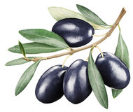 Black olives with leaves on a white background. Royalty Free Stock Images