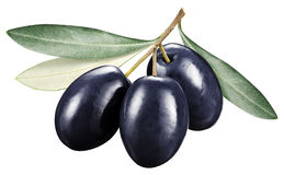 Black olives with leaves on a white background. Royalty Free Stock Photos