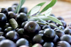 Black Olives 2 Stock Photography