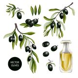 Black olives and olive oil isolated on white background, Vector illustration. Black olives and olive oil isolated on white background Stock Images