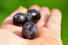 Free Black Olives On Hand . Royalty Free Stock Photo - 18524875