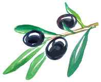 Black olives watercolor Royalty Free Stock Photography