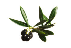 Black Olives. On a white background royalty free stock image