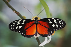 Black and Orange Butterfly Stock Photo