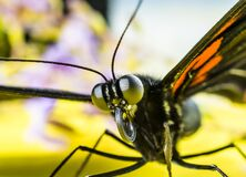 Black and Orange Butterfly Royalty Free Stock Images