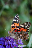 Black and orange butterfly Stock Images