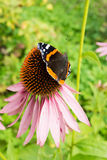 Black and Orange Butterfly on Flower Royalty Free Stock Photos