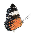 Black and orange butterfly isolated. Beautiful black and orange butterfly isolated in white background in flying position royalty free stock photos