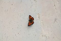 Black and orange butterfly on a wall Stock Photography