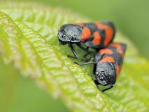 Black and Orange Insect Eating Green Leaf during Daytime in Camera Focus Photography Stock Images