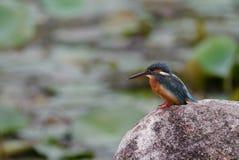 Black and Orange Long Beak Bird on Brown Rock during Daytime Stock Images