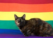 Tortie torbie tabby cat on gay pride flag background stock photo