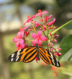 Black Orange and White Butterfly Royalty Free Stock Photos