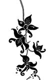 Black Orchids. Hand-drawn vectorized artwork. Colour can be easily changed.Elegant and decorative Stock Images