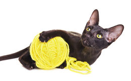 Black Oriental Shorthair Cat Playing With Woolen Ball Royalty Free Stock Photos