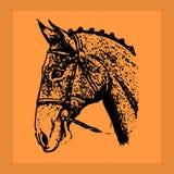 Black ornate-silhouette stallion. Head in orange frame, vector illustration