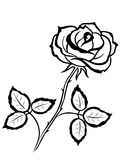 Black outline of rose flower Royalty Free Stock Photography