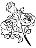 Black outline of rose flowers Stock Photography