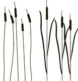 Black outlines of cattail vector illustration. Brushes Royalty Free Stock Photos