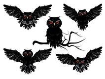 Black Owl Stock Photo