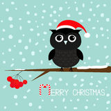 Black owl in Santa Claus hat. Cute cartoon character sitting on rowan rowanberry sorb berry tree branch. Snow flake blue backgroun Royalty Free Stock Images