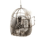 Black Owl Sitting In a Birdcage Royalty Free Stock Image