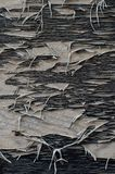 Black paint peels away from plywood royalty free stock photography