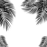 Black Palm Leaf on White Background. Vector Illustration. royalty free illustration