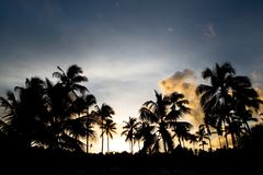 Black palm on night beach Stock Images