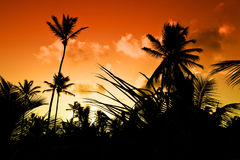 Black palm on night beach Royalty Free Stock Image