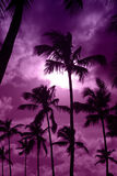 Black palm on night beach Stock Photo